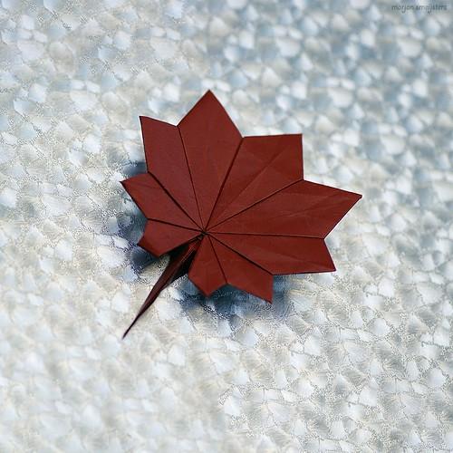 Origami Full-Moon Maple (Kasumi Seishi)
