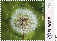 01 Geometrie-cirkel timbre E©