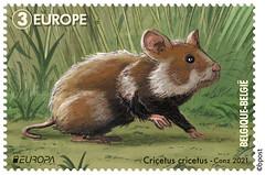 10 Bedreigde dieren tA Hamster©