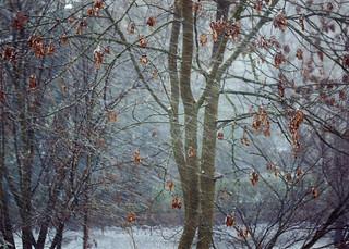 SNOW BLIZZARD...
