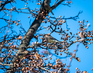 tree full of fruit and birds