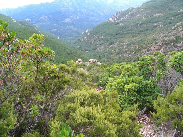 Photo:Corse2012030070 By Corse sauvage
