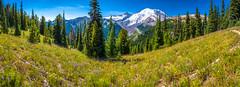 Mount Rainier National Park Fine Art Landscape Nature Photography Washington State! Superbloom Wildflowers Lupine! Elliot McGucken Master Medium Format Landscape Photography Fuji GFX 100 & FUJIFILM FUJINON GF LM WR Lens
