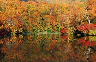 Autumn colour reflections, 日本の秋色