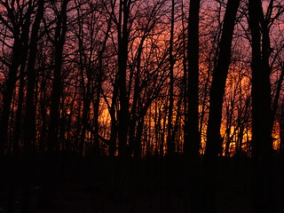 Fiery Michigan sunset through bare trees
