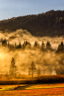 Golden Trees With Fog