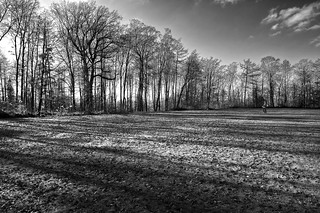 Trees_9853_bw