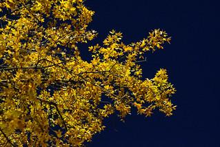 Colours of an autumn evening