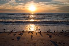 Coucher de soleil sur St-Pete Beach