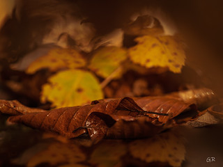 Dernier parfun d'automne