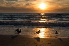 St-Pete Beach