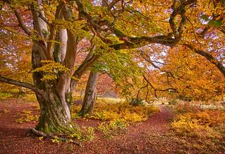 ...colorful woodland