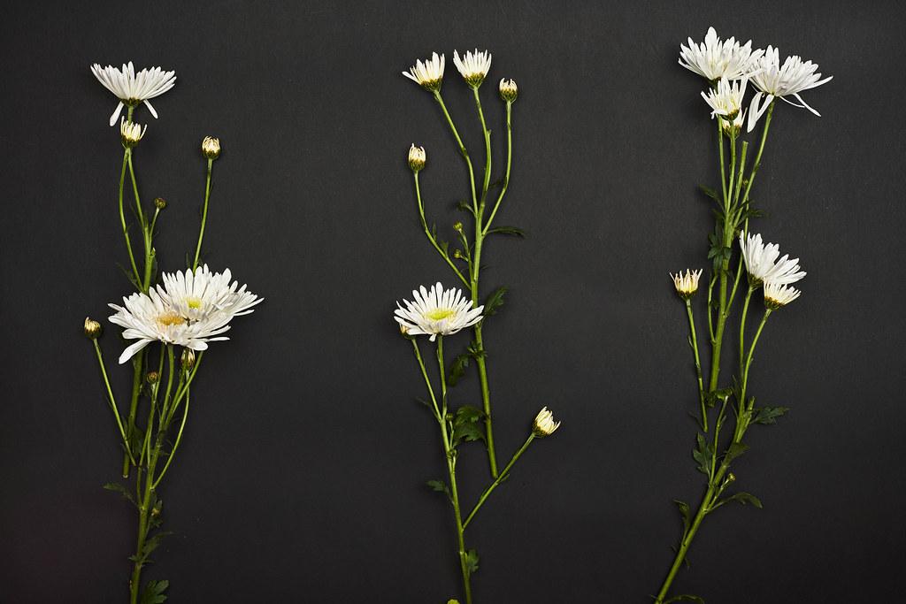 Spring flowers on black