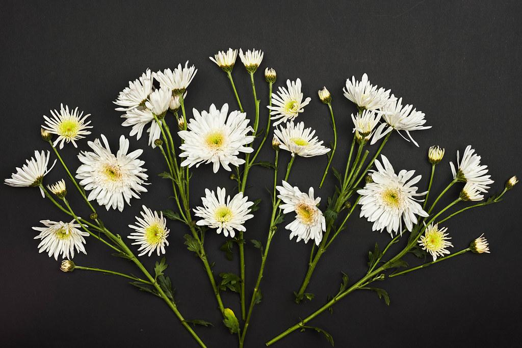 Common daisy flowers on dark background