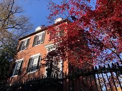 Red Japanese maple, red brick house on P Street NW, Georgetown, Washington, D.C.