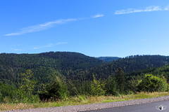 Forêt - D44