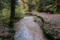 Ruisseau du Creux des Mouilles @ Saint-Sixt