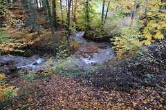 Ruisseau des Devants @ Saint-Sixt