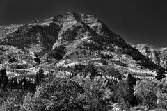 I Saw Trees Going Up and Up the Mountainside As the Moon Hung Above (Black & White)