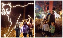 Holiday Lights at the Bronx Zoo