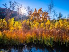 Malibu Creek State Park Southern California Fine Art Fuji GFX100 Landscape Photography! Malibu Canyons Autumn Colors Fall Foliage!  Elliot McGucken Master Medium Format Landscape Nature Photography Fuji GFX 100 & FUJINON FUJIFILM GF Lens