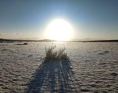 Antelope Island-5