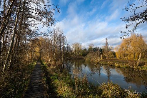 The corduroy path