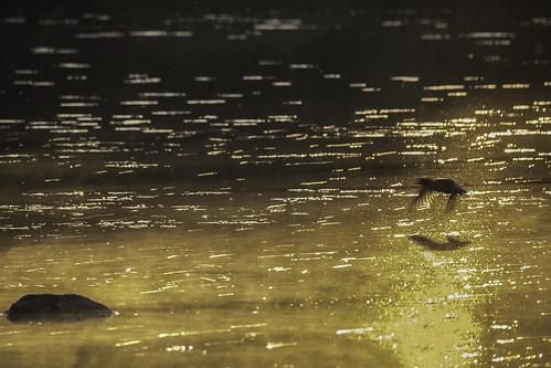 Auringon kultaamaa, IKs Kuukausi kilpailu