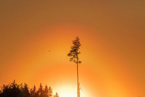Aurinko kultaa taivaan, IKs Kuukausi kilpailu