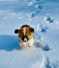 Fruity racing across the Snow