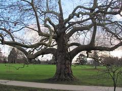Parc de Rentilly (18) - Photo of Saint-Thibault-des-Vignes