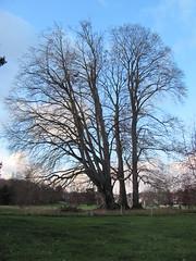 Parc de Rentilly (16) - Photo of Saint-Thibault-des-Vignes