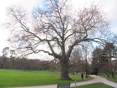 Parc de Rentilly (17) - Photo of Saint-Thibault-des-Vignes