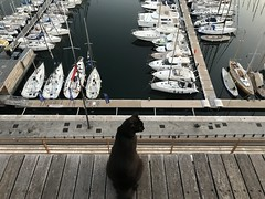 Photo 16e Arrondissement de Marseille
