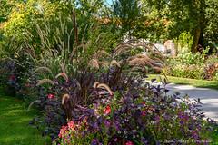 Tarbes : le jardin Massey