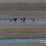 Aves en La Mancha Húmeda. 25-12-2020