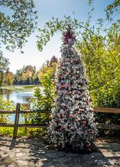 Florida Botanical Garden 2020