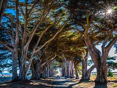 Cypress Tree Tunnel Point Reyes National Seashore California Fine Art Fuji GFX100 Landscape Photography! Dirt Road Canopy Tree Tunnel!  Elliot McGucken Master Landscape Nature Photography Fuji GFX 100 & FUJINON  Fujifilm GF 45-100mm f/4 R LM OIS WR Lens