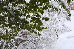 Albany winter