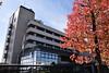 Photo:津山市役所庁舎と紅葉_225 By 津山市立図書館 Public Library of Tsuyama