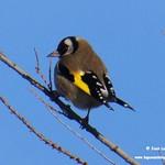 Aves en las lagunas de La Guardia (Toledo) 27-12-2019