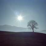 Lone Tree Hill  (In Explore - Nikon 35Ti / Portra 400)