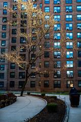 Tree in Sunlight II