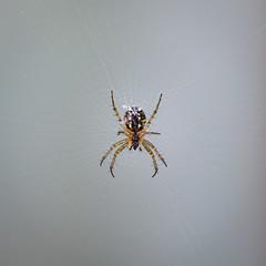 Alien Spider II