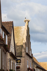 Stork in Nest, Mittelbergheim, Alsace, France
