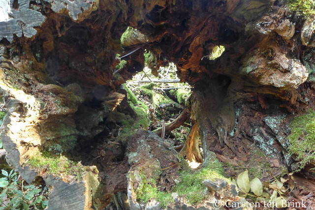 Photo:Through the trunk By 10b travelling / Carsten ten Brink