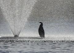 Shower break
