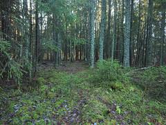 Elleve, Trollskogen, Askim, Indre Østfold, Viken, Norway