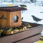 Essenzeit am Vogelhaus