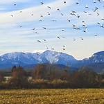 Schneeberg Blick